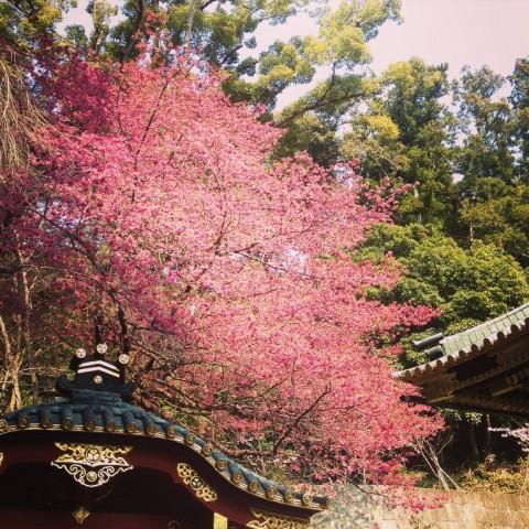 春_2015桜04